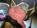 darla in her stroller and buggy as we go out alot now and they enjoy.